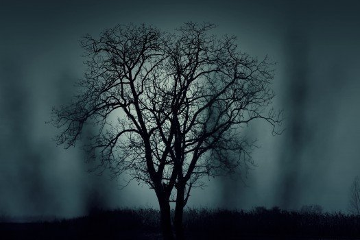 silhouette d'arbre dans la brume