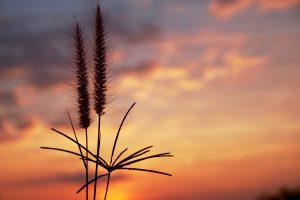 Herbes coucher de soleil illustration pouvoir personnel
