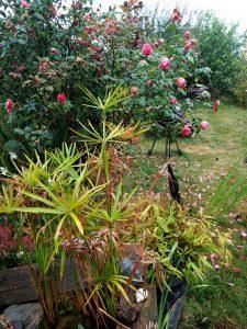 Jardin sous la pluie illustration Pluie d'août